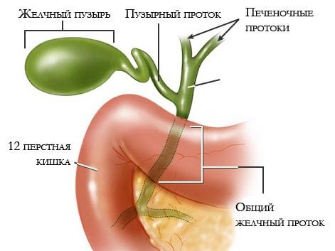 ozdorovlenie-zhelchnogo-puzyrya