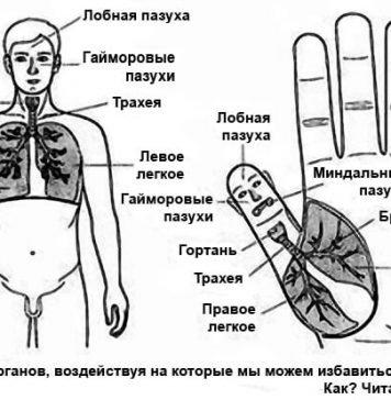 Лечение простуды средствами Су Джок терапии