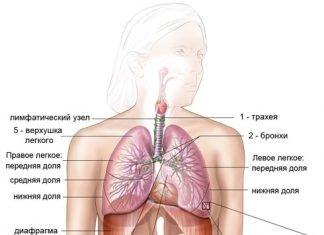 Оздоровление легких