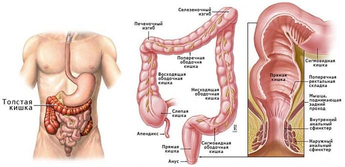Оздоровление толстого кишечника