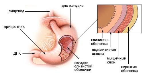 Оздоровление желудка
